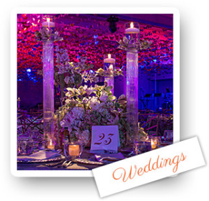South Florida Wedding Designer